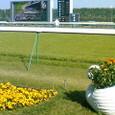 馬場脇の白鳥花壇